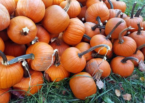 1_SATF-Pumpkin-Party